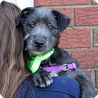 Adopt A Pet :: Gloria - Harrison, NY