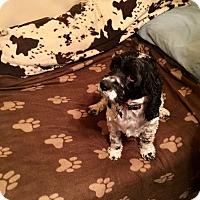Adopt A Pet :: Beau 4yr Adopted - Mentor, OH