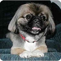 Adopt A Pet :: Ewok - Mays Landing, NJ