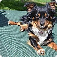 Adopt A Pet :: Tucker - Los Angeles, CA