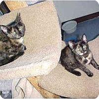 Adopt A Pet :: Aubrey & Melissa - Quincy, MA