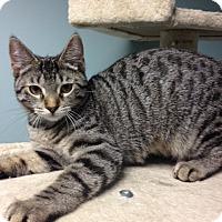 Adopt A Pet :: Punkie - Byron Center, MI