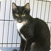 Adopt A Pet :: Bernice - Medina, OH