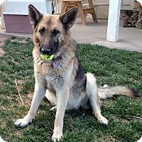 Adopt A Pet :: Reagan - Victorville, CA