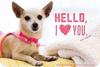 Chihuahua Mix Dog for adoption in Mesa, Arizona - Isabella