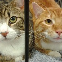 Adopt A Pet :: Fred and Hermoine - Ephrata, PA