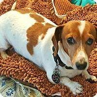 Adopt A Pet :: Phoenix - Andalusia, PA