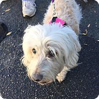 Adopt A Pet :: Rose - Summerville, SC