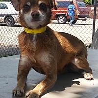 Adopt A Pet :: ZUMI - Dallas, TX