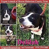 Adopt A Pet :: Delilah - Hearne, TX