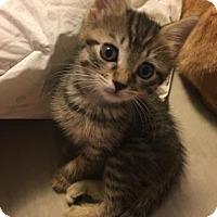 Adopt A Pet :: Tuesday - New York, NY