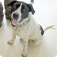 Adopt A Pet :: Pepper - Ludington, MI