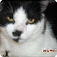 Adopt A Pet :: Rocky - Riverside, RI