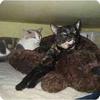 Adopt A Pet :: Miss Vicky - Lombard, IL