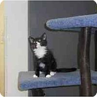 Adopt A Pet :: Edsel - Milwaukee, WI