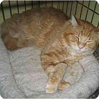 Adopt A Pet :: Frankie - Lombard, IL