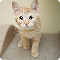 Adopt A Pet :: Ruby - Shelton, WA