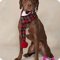 Adopt A Pet :: Louie - Bradenton, FL