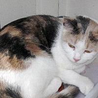 Adopt A Pet :: Anita - Stanhope, NJ