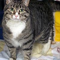 Adopt A Pet :: Cherokee - St Louis, MO