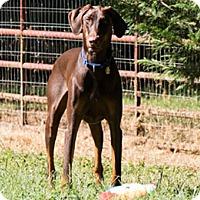 Adopt A Pet :: MATT - Greensboro, NC