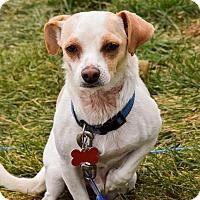 Adopt A Pet :: Wishbone - Meridian, ID