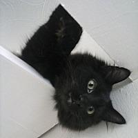 Adopt A Pet :: Oz - Clarkson, KY