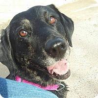 Adopt A Pet :: Grace - Rowlett, TX