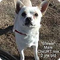 Adopt A Pet :: Stewie - Gadsden, AL