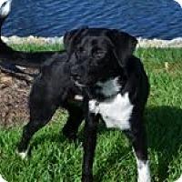 Adopt A Pet :: Mimi - Lewisville, IN