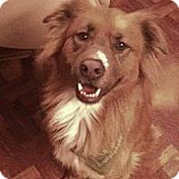 Adopt A Pet :: LEO - Hollywood, FL
