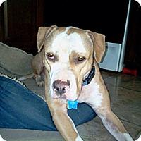 Adopt A Pet :: Betty - Brewster, NY