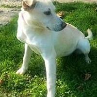 Adopt A Pet :: shih - Prestonsburg, KY