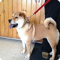Adopt A Pet :: no name - Tillsonburg, ON