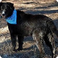 Adopt A Pet :: Bruce - Tempe, AZ