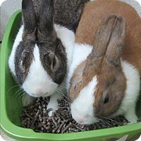 Adopt A Pet :: Warlock & Mr Beebs - Newport, DE