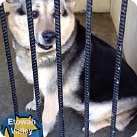 Adopt A Pet :: Freddie - Boston, MA