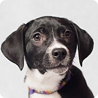 Adopt A Pet :: Heather - Minneapolis, MN