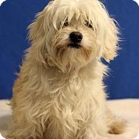 Adopt A Pet :: Zoe - Waldorf, MD