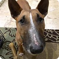 Adopt A Pet :: Billie Piper - Houston, TX