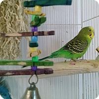 Adopt A Pet :: Sassy and Dreama - Grandview, MO