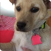Adopt A Pet :: Pratap - Acworth, GA
