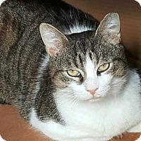 Adopt A Pet :: Newton - Toronto, ON