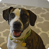 Adopt A Pet :: Sophia - Germantown, TN