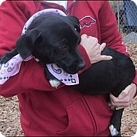 Adopt A Pet :: Rosie - Somers, CT