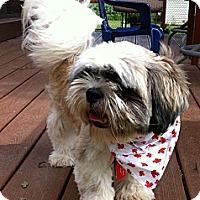 Adopt A Pet :: Eddie - Toronto, ON