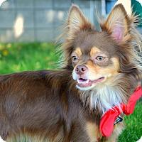 Adopt A Pet :: Bentley - Rockaway, NJ