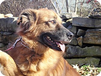 Retriever (Unknown Type) Mix Dog for adoption in Clarksville, Tennessee - Copper