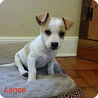 Adopt A Pet :: Lance - Gainesville, FL