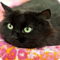 Adopt A Pet :: Anoni - Great Falls, MT